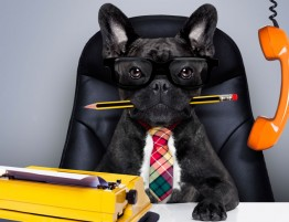 dog sitting at business desk