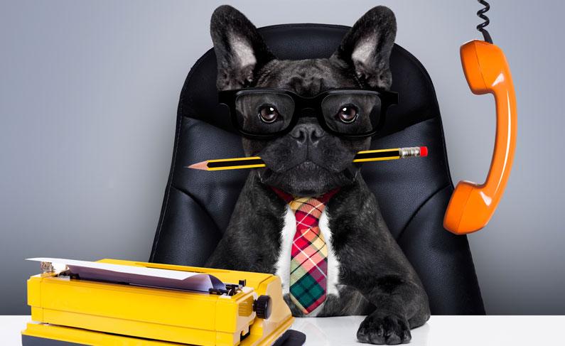 dog sitting at business desk